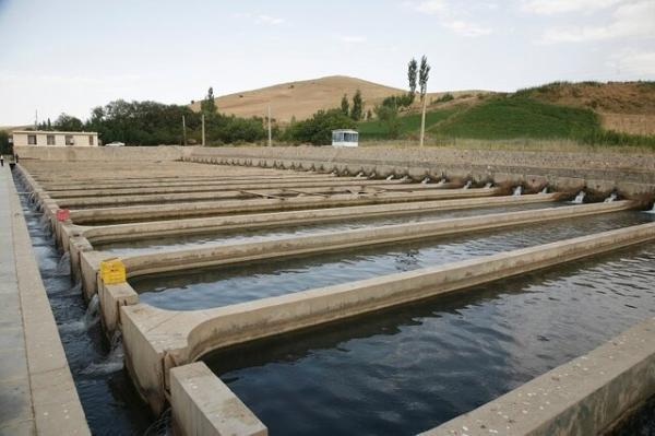 فراوری 3870 تُن ماهی در کردستان طی امسال